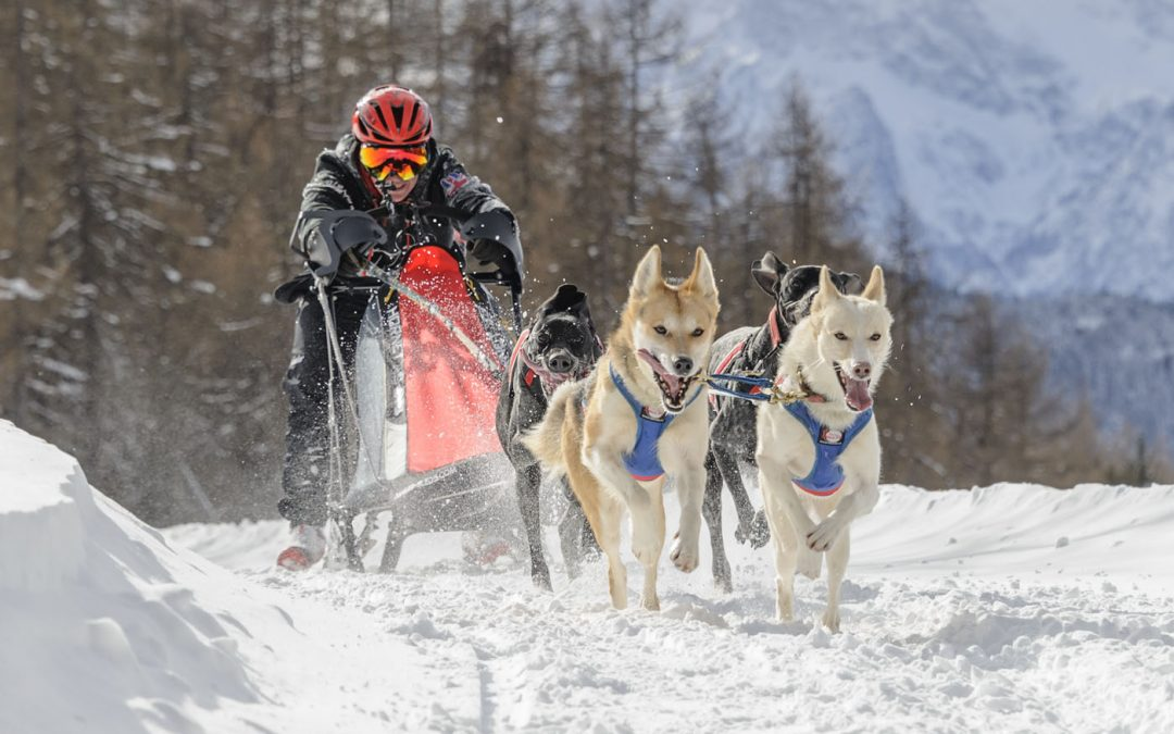 Armadillo embarks on sponsorship deal to support sled dog racing